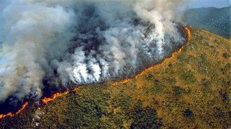 What Is Happening In Amazon Rainforest And What We Can Do
