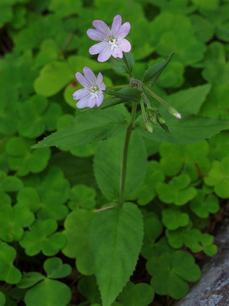 plantes pour chambre plante d polluante pour chambre dracaena marginata of tous