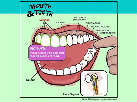 Diagram Of Right Rear Molar by Bracing Myself For Clear Aligners 17 Weeks Part 3