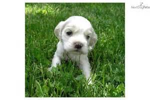 quiet dog breeds dog breeds picture