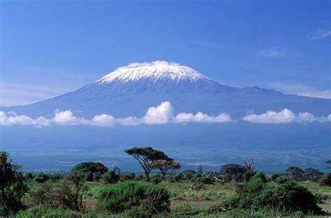 africa tanzania mt kilimanjaro landscape  zebra fine