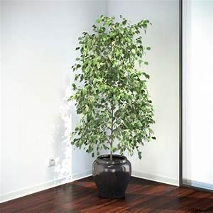 Ficus Benjamini Vermehren : ficus benjamina vizpark ~ Lizthompson.info Haus und Dekorationen