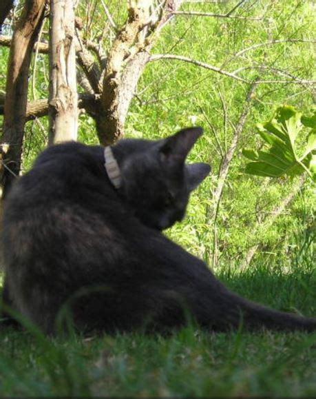 cat uti cat bladder infection best pet home remedies