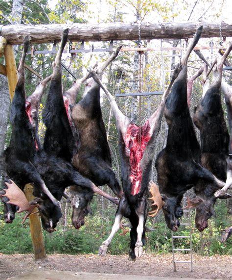 chambre froide chasse services aux chasseurs pourvoirie le chasseur