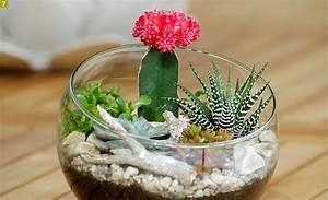 Diy creer un terrarium avec des succulentes detente jardin for Comment amenager un jardin 11 diy creer un terrarium avec des succulentes detente jardin