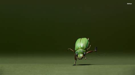 dancing insect wallpaper funny wallpapers