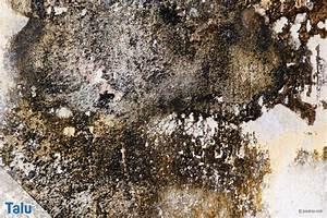 Weißer Schimmel An Der Wand : wei er schimmel an der wand was tun wei schimmel ~ Michelbontemps.com Haus und Dekorationen