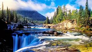Nature, Mountain, Dense, Spruce, Forest, River, Rock, Waterfall