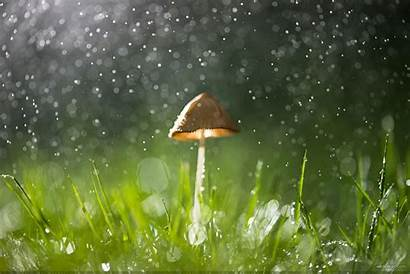 Rain Wallpapers Nature Desktop Rainy Wangli Backgrounds
