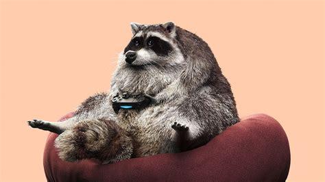 Download Wallpaper 1920x1080 Raccoon Joystick Funny