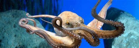aquarium de barcelone tarif visiter l aquarium de barcelone