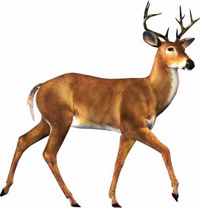 Deer Clip Clipart Clipartix Clipartcow Cliparting