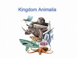 Kingdom Animalia Related Keywords - Kingdom Animalia Long ...