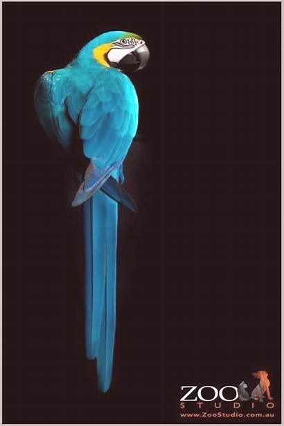Macaw Animal Zoo Birds Colorful Exotic Studios