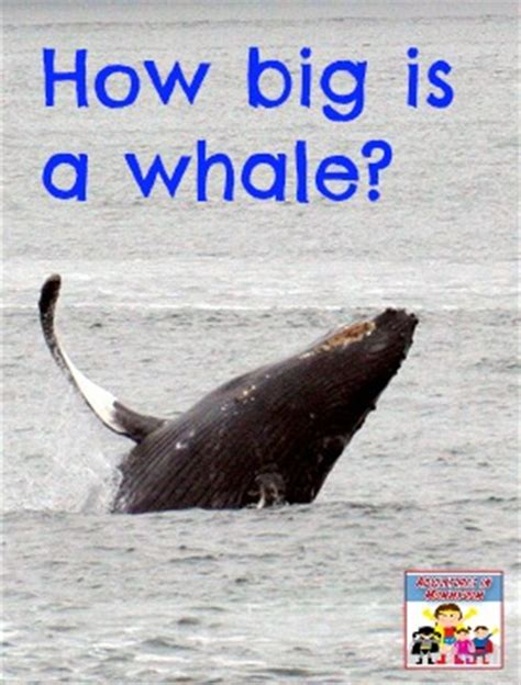 Science Sunday How Big Is A Whale?
