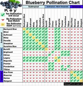 Rose Variety Chart Blueberry Plant Vaccinium Spp