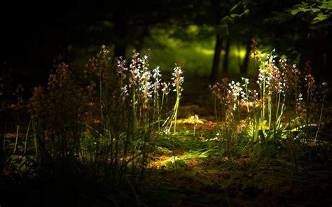 shiny nature  night hd wallpapers rocks