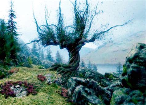 scariest tree   world suffolk ft beech  wonky