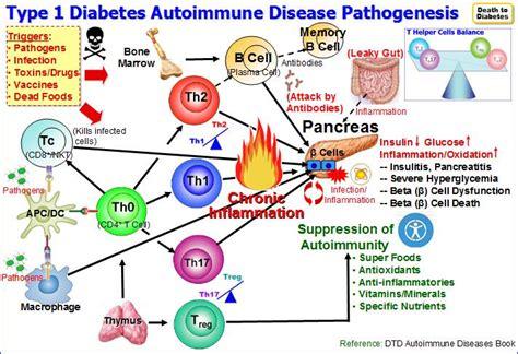 Type 1 Diabetes  Autoimmune  Beta Cell Regeneration
