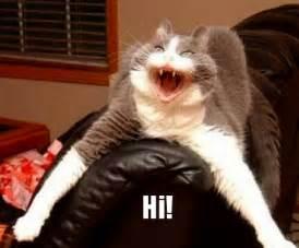 Funny Cats Saying Hi