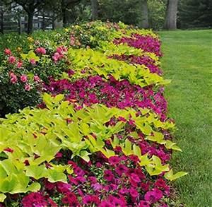 Blumenkübel Bepflanzen Vorschläge : planting wave in the garden blumen pinterest terrasse pflanzen und g rten ~ Whattoseeinmadrid.com Haus und Dekorationen