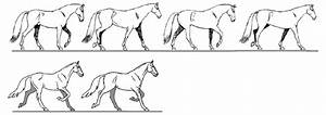 Symmetrical Gaits In Which The Movements Of The Left And Right Limbs