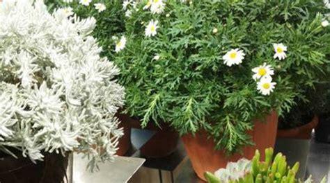 foglie e fiori genova arenzano a pasqua torna quot fiori in porto quot protagonisti