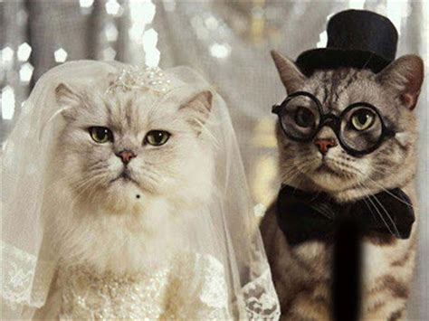 50 Naughty Funny Cats Pictures