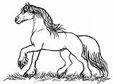 Gypsy Coloring Horse Drawing Designlooter Horses Horse6 Fairy Drawings Stacey Mayer sketch template