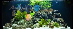 Aquarium Einrichten Anfänger : die beliebtesten aquarium fische ~ Lizthompson.info Haus und Dekorationen