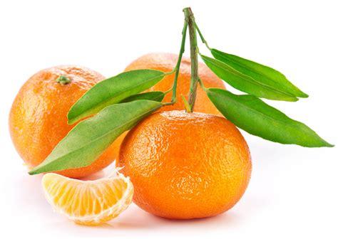 wallpaper food white background fruit tangerine