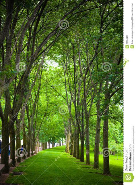 path   trees stock image image  holidays