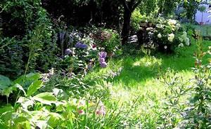 Pflanzen Für Schattige Plätze : pflanzen f r halbschattige und schattige pl tze garten pinterest garten pflanzen schatten ~ Orissabook.com Haus und Dekorationen