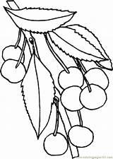 Cherry Coloring Cherries Riscos Frutas Blossom Legumes Desenhos Ausmalbilder Pintura Kirsche Desenhoseriscos Tela Pintar Drawing Popular Dibujos Ausdrucken Malvorlagen Kostenlos sketch template