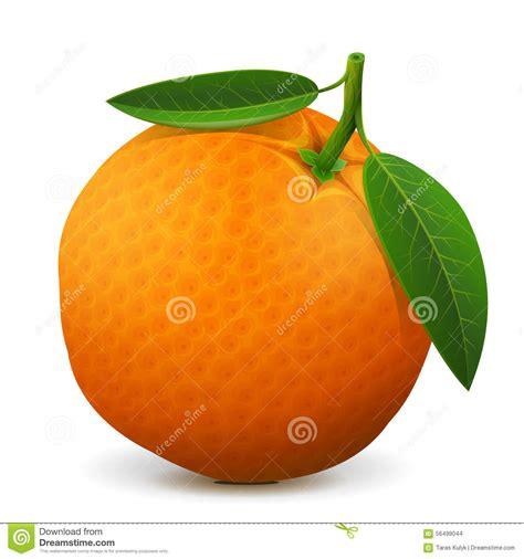 Orange Fruit Close Stock Vector Image Healthful
