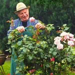 Rosen Schneiden Zeitpunkt : rosen schneiden ~ Frokenaadalensverden.com Haus und Dekorationen