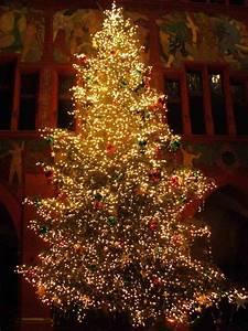 Christmas Tree Pics 02