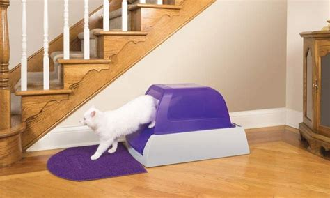 cat litter boxes  odor control