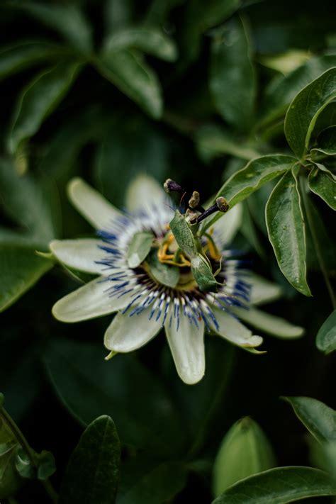 รูปภาพฟรี: ธรรมชาติ