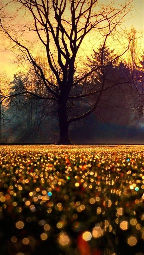 Autumn Lock Screen Wallpapers by 1000 Images About Phone Wallpapers On Iphone