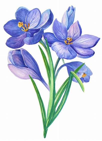 Flower Watercolor Flowers Drawing Clipart Floral Painting