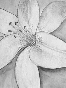 Pencil Drawing of a Lily | Drawings | Pinterest | Pencil ...