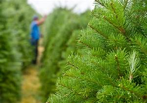 Baldwin County's largest Christmas tree farm opens-WPMI ...