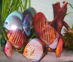 Transportbox Für Fische : kundenfeedbacks von diskus direktdiskusfische kaufen ~ Michelbontemps.com Haus und Dekorationen