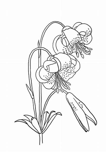 Flower Drawing Pages Coloring Draw Sketch Printable