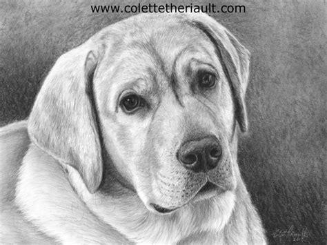 yellow labrador retriever dog drawing pencil portrait