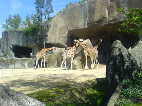 aquarium de vincennes zoos parcs animaliers r 233 serves d animaux 75