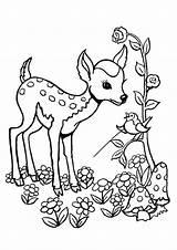 Deer Coloring Easy Tulamama Plants sketch template