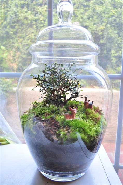 make your own moss terrarium make your own terrarium smart ideas pinterest terrarium make your own and make your