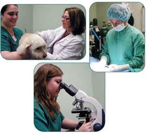 kenwood animal clinic 301 moved permanently